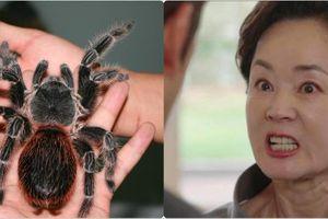 Bố mẹ vợ đến nhà chơi nhiều, con rể mua nhện độc khổng lồ 'trấn yểm'