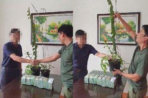2 chậu lan 3,5 tỷ đồng: Cú áp phe có mục đích của nhóm người Hà Tĩnh?