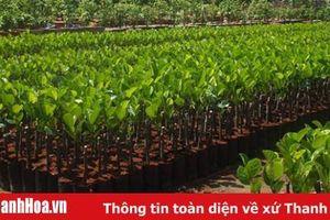Tăng cường các biện pháp nâng cao chất lượng giống cây trồng lâm nghiệp