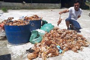 Trại nuôi gà bị nhóm người ngắt điện và ném đá, hơn 1.000 con gà chết chất đống trong đêm