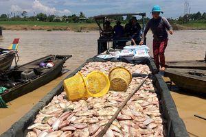 Hàng trăm tấn cá chết trắng ở Đồng Nai