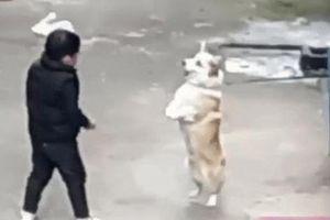 Đến chó cũng phải khóc với những màn troll đến khốn khổ