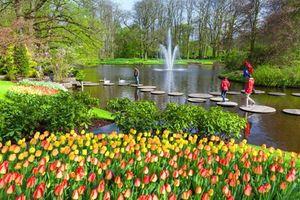Vườn hoa tulip lớn nhất thế giới 'hốt bạc' ở Hà Lan