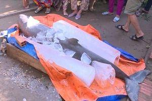 'Loài cá lạ' mà ngư dân Bến Tre bắt được là cá heo nước ngọt