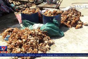 Nhóm đối tượng tấn công trang trại nuôi gà, làm chết 1.200 con