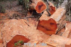 Khởi tố thêm 6 bị can trong vụ phá rừng tại Vườn Quốc gia Phong Nha - Kẻ Bàng