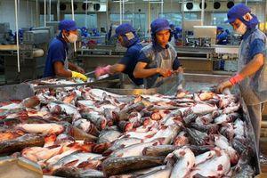 Cá tra Việt bán chạy tại Nhật Bản