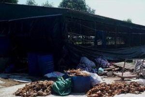 Hà Tĩnh: Kẻ lạ mặt đột nhập phá trang trại, giết hại hàng nghìn con gà trong đêm