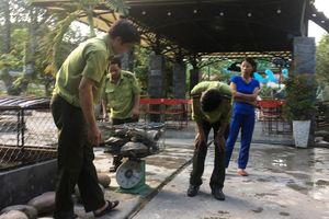 Xử phạt hành chính chủ quán cà phê nuôi nhốt 7 con rùa thuộc nhóm quý hiếm