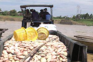 338 tấn cá bè chết trên sông La Ngà: Truy các nguồn xả thải ra hồ Trị An
