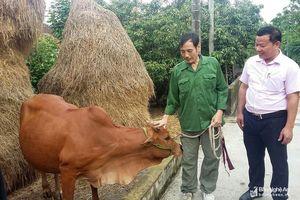 Nguồn vốn chính sách giúp người dân Nam Đàn phát triển kinh tế