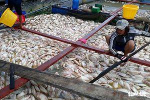 Bộ TN&MT vào cuộc xử lý tình trạng cá chết trên sông La Ngà