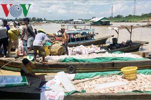Cá bè sông Là Ngà chết hàng loạt, Đồng Nai khuyến cáo giảm đàn