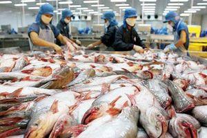 Đa dạng hóa thị trường xuất khẩu cá tra