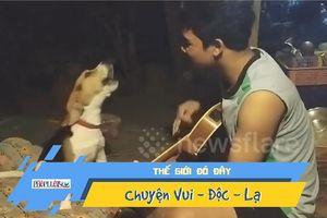 Thích thú với chú chó 'hát' khi chủ đệm đàn