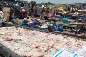 Đồng Nai: Hàng trăm tấn cá chết trên sông La Ngà là do... mưa to