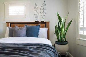 Loại cây trồng trong phòng ngủ giúp bạn ngon giấc