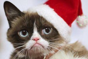 Grumpy Cat tiếp tục 'sống' nhờ trí tuệ nhân tạo