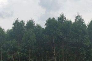 Huyện ủy Kbang đề nghị UBND tỉnh Gia Lai xử lý trách nhiệm công ty Hiệp Lợi