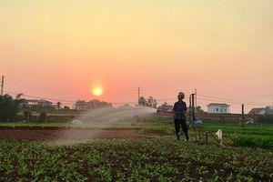 Tránh nắng nóng hơn 40 độ C, nông dân Hà Nội ra đồng từ 4 - 5 giờ sáng