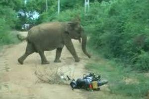 Voi mẹ nổi giận khi voi con bị rơi xuống hố bùn