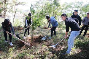 Đà Lạt trồng 6.000 cây thông và mai anh đào trong ngày sinh nhật Bác