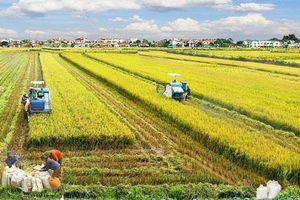 Nông dân ĐBSCL chủ động 'thuận thiên' thích ứng trong sản xuất nông nghiệp
