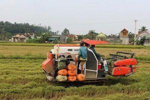 Vẫn có xu hướng nông dân giữ ruộng làm vật 'bảo hiểm'