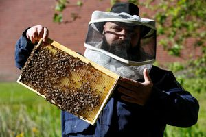 Tù nhân Đức bảo tồn loài ong và sản xuất mật ong ở trong tù