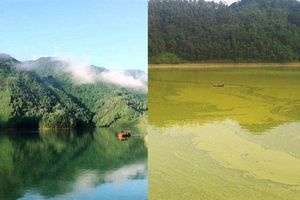 Giấy phép hoạt động nuôi cá lồng trên hồ Gò Miếu hết hạn... 1 năm