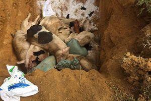 Quảng Nam khẩn trương phòng, chống dịch tả lợn châu Phi