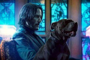 'Sát thủ Jonh Wick' tái xuất, chiếm lĩnh ngôi vương của 'Avenger: Hồi kết'