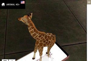 Ứng dụng animal 4D đang gây sốt mạng xã hội hoạt động ra sao?