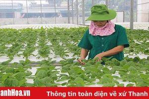 Huyện Quảng Xương có 417 doanh nghiệp hoạt động