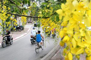 Chùm ảnh: Bất chấp 'chảo lửa' hơn 40 độ C ở Hà Nội, hoa muồng hoàng yến vẫn hút hồn giới trẻ