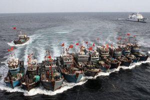 Đội tàu TQ tràn xuống Biển Đông cào nghêu, đe dọa hủy hoại môi trường