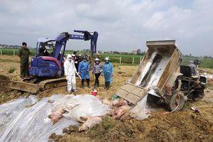 Khai khống lợn dịch để trục lợi: Bộ Nông nghiệp 'lệnh' xác minh gấp