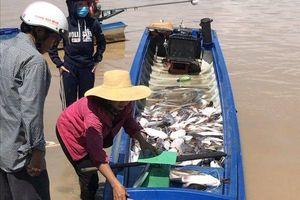 Gần 1.000 tấn cá chết trên sông La Ngà, UBND huyện Định Quán 'cầu cứu' tỉnh Đồng Nai