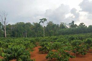 Tại sao chưa xử phạt, thu hồi diện tích đất rừng sai phạm của công ty Hiệp Lợi?