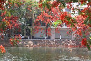 Chẳng cần đi xa, cũng có một 'thành phố hoa phượng đỏ' giữa lòng Hà Nội