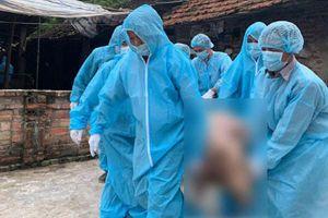 Phòng dịch tả lợn châu Phi, Hàn Quốc giám sát chặt chẽ việc nuôi lợn bằng thức ăn thừa
