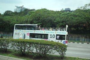 Sắp có tuyến xe 2 tầng mui trần chở khách du ngoạn quanh TP HCM