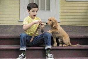 A Dog's Journey: Hành trình mới của Bailey lấy đi vô vàn nước mắt từ khán giải