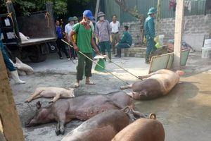 Xử lý nghiêm hành vi trục lợi từ dịch tả lợn châu Phi
