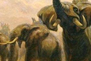 Cách tuyển voi oai hùng trong sử Việt thời chúa Nguyễn