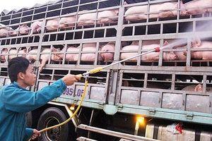 Dịch tả lợn châu Phi: Bộ NN&PTNT 'hối' Bộ Tài chính kinh phí chống dịch