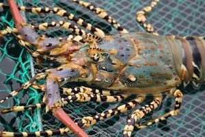 Trung Quốc miễn thuế nhập khẩu cho 33 mặt hàng hải sản