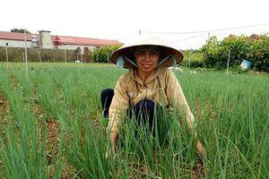 Sơn La: Ở nơi này dân khấm khá nhờ mỗi năm bán ra 3.000 tấn rau ngon