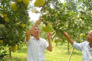 Huyện Chương Mỹ: Hiệu quả từ chuyển đổi cơ cấu sản xuất nông nghiệp