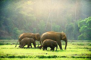 Nỗ lực bảo tồn những động vật khổng lồ sinh sản chậm